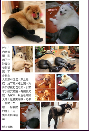 Several of the canine victims/ PHOTO VIA marcus66ed.tumblr.com